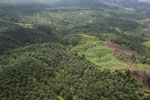 Palm oil plantation in Borneo -- sabah_aerial_3105