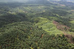 Palm oil plantation in Borneo -- sabah_aerial_3106