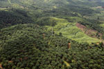 Palm oil plantation in Borneo -- sabah_aerial_3107