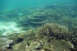 Coral in Borneo -- sabah_underwater_0008