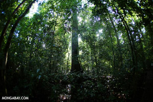 La selva en Borneo
