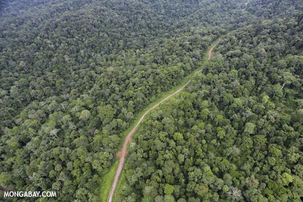 Rainforest in Malaysian Borneo.