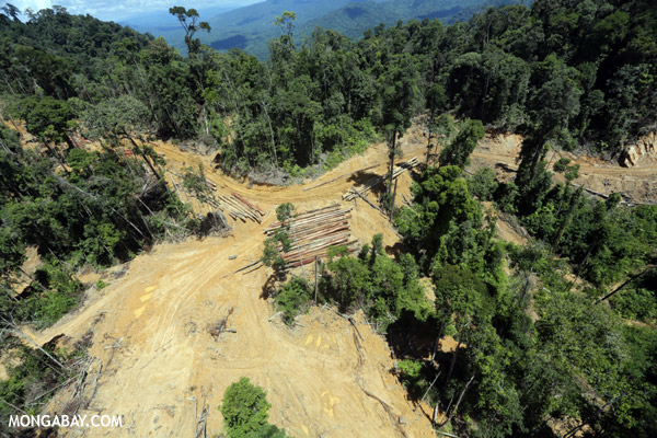 Industrial rainforest logging is often posited as a benign activity by groups funded by the logging industry.