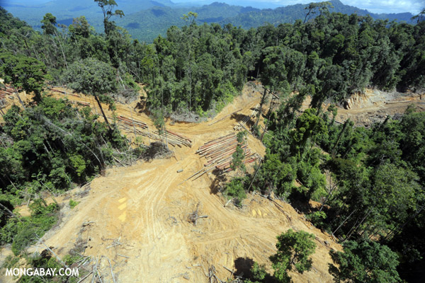 Rainforest logging in Borneo
