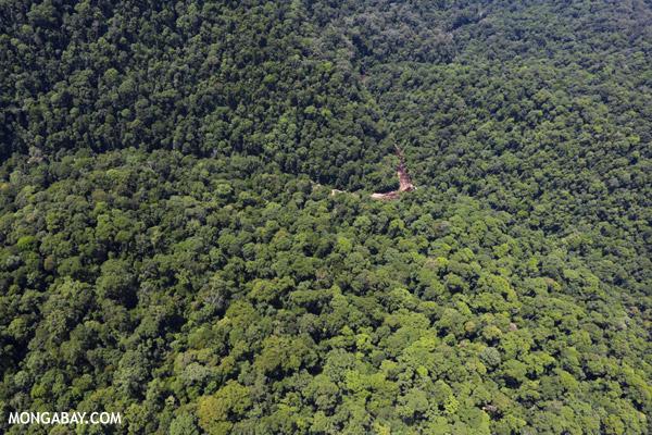 A rainforest river in Malaysia's Sabah state. Photo: Rhett A. Butler