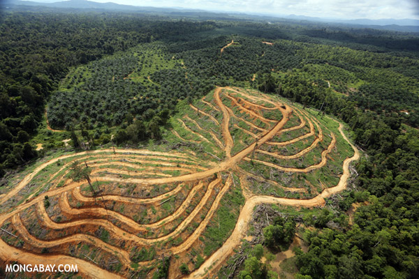 Aerial view of deforestation for palm oil in Borneo. Photo by: Rhett A. Butler.