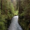 Olympic Peninsula rainforest