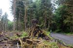 Temperate rainforest logging [olympic_rainforest_0473]