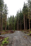 Logging road in the Pacific Northwest