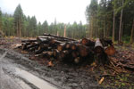 Logging road near Lake Quinault
