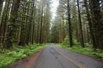 Road through the Hoh rainforest