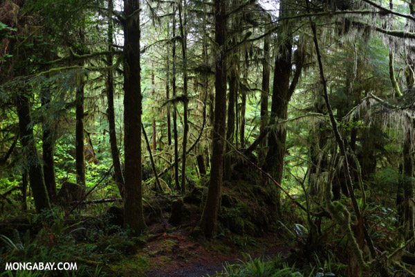 Rainforest path on the Olympic Peninsula