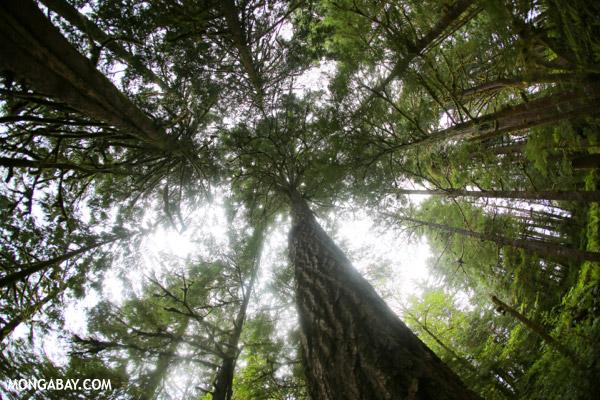 Olympic National Park rain forest [olympic_rainforest_0080]