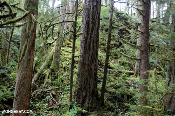 Temperate rain forest in the Pacific Northwest [olympic_rainforest_0358]