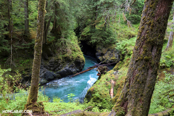 Blue water of the Quinault river [olympic_rainforest_0436]