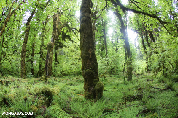 Olympic rainforest [olympic_rainforest_0757]