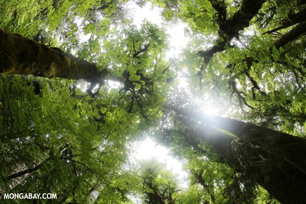 Olympic rainforest [olympic_rainforest_0766]
